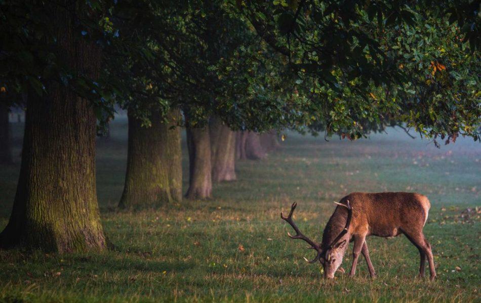 deer-1-1024x683